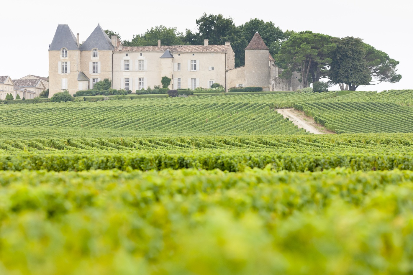 The magnificent 10: top Bordeaux wine producers